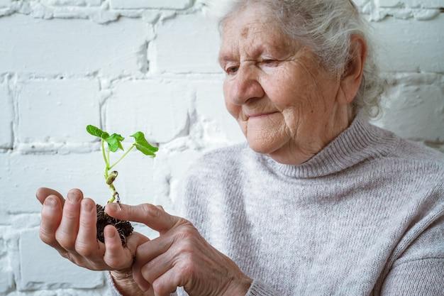 世界環境デーと環境コンセプトを守り、植物を育てるボランティアの女性、苗木 Premium写真