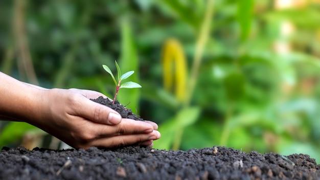 땅에 심기 위해 양손에 작은 나무를 들고 소녀와 세계 환경의 날 개념.