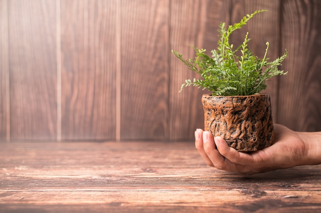 World environment day .love the world .hand holding a plant pot