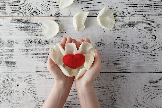 World heart care day background. white rose petal in human hands. top view