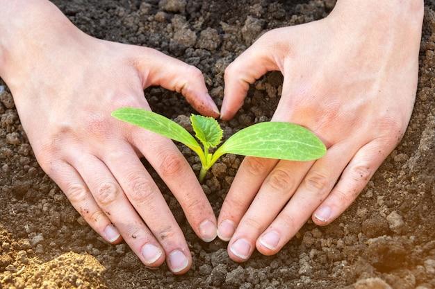세계 토양의 날 개념: 흙에 작은 새싹이 있는 심장 모양의 인간 손. 개념 보호 및 환경 보호