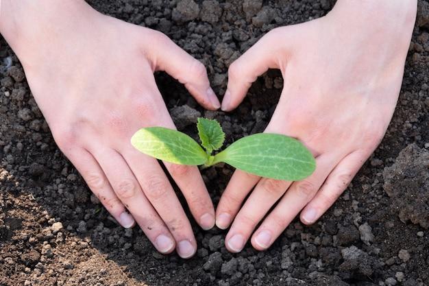 세계 토양의 날 개념: 흙에 작은 새싹이 있는 심장 모양의 인간 손. 정원에 식물을 심는 봄. 가정 및 정원 장식 개념입니다.