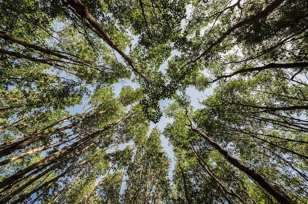 Взгляд червяка с деревьями в густом лесу