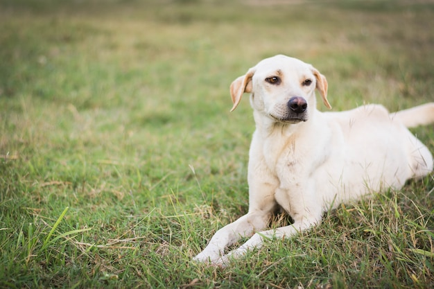 Wounded dog sitting on green grass