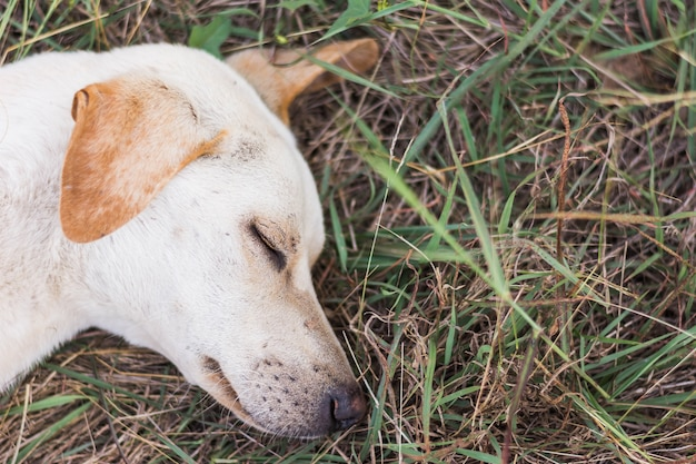 Wounded dog sleeping on dry grass