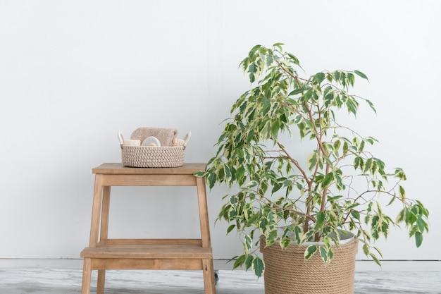 천연 바디 케어 제품과 대형 가정용 식물로 짠 바구니
