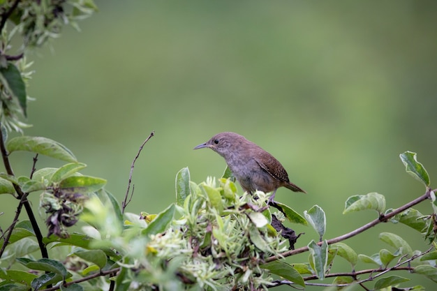 Wren sitting on the tree in the countryside