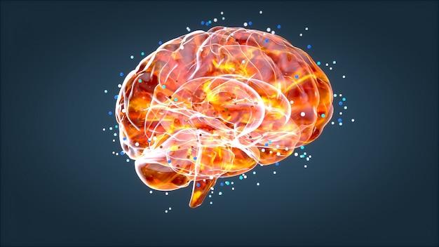 脳のx線、人体解剖学、3dイラストレーションニューロン