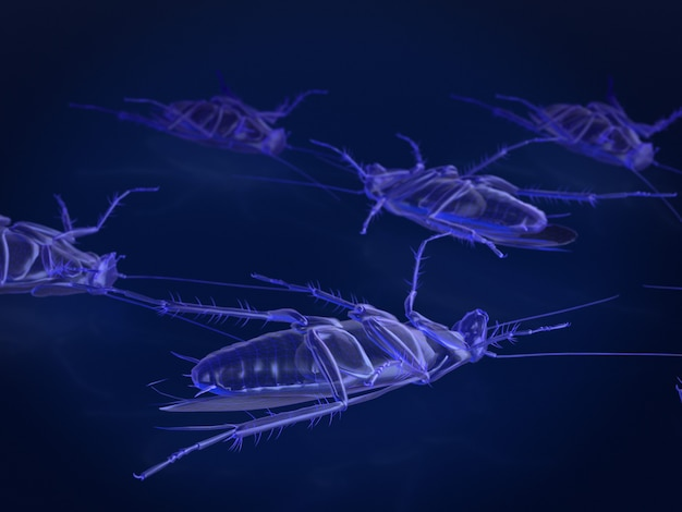 X-ray model of dead cockroaches