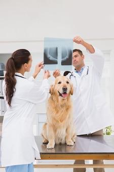 犬のx線を調べる獣医師の同僚