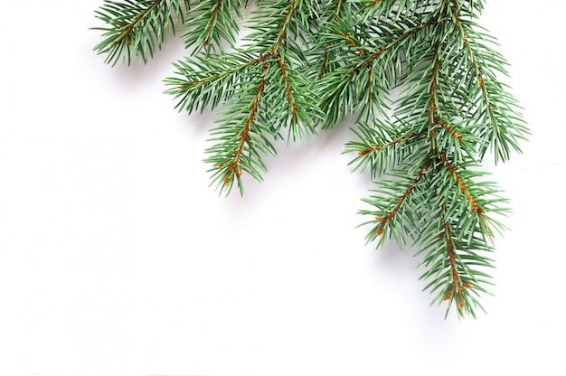 Xマスモミの木の枝が分離されました。松の枝クリスマスの背景