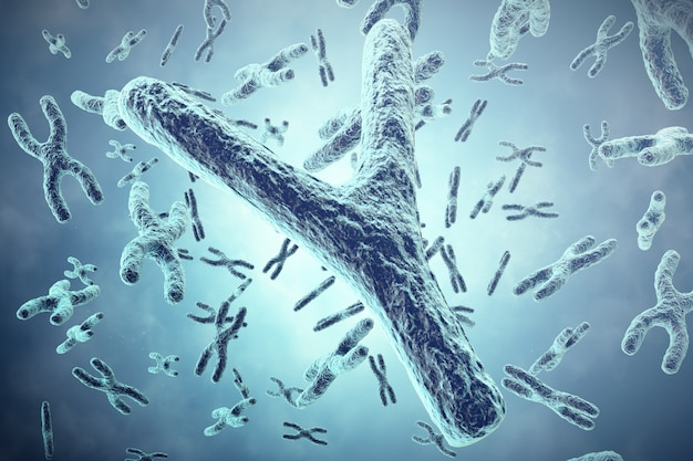 Y chromosome in the foreground, a scientific concept. 3d illustration