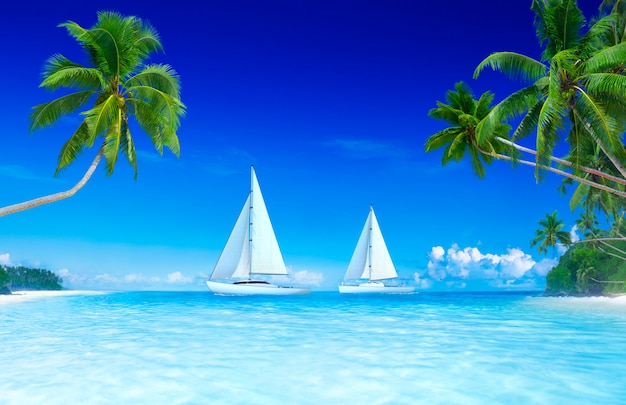 Yacht blue sky and palm tree.