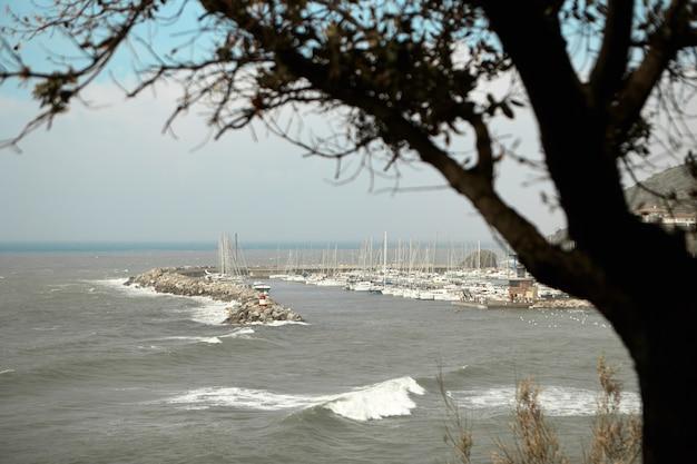 前景に一本の木があるヨットクラブとマリーナの眺め。