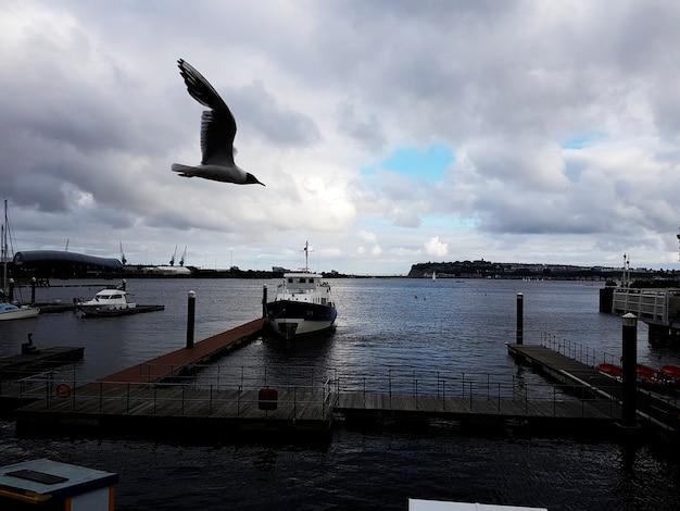 Yacht club parking seagull bird flying