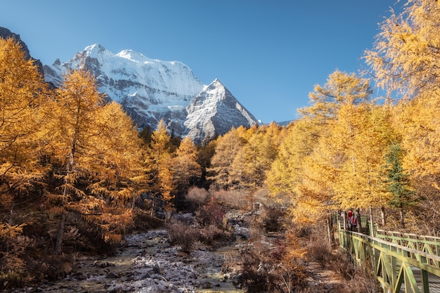 Yading自然保護区で秋の松林の中の聖xiannairi山
