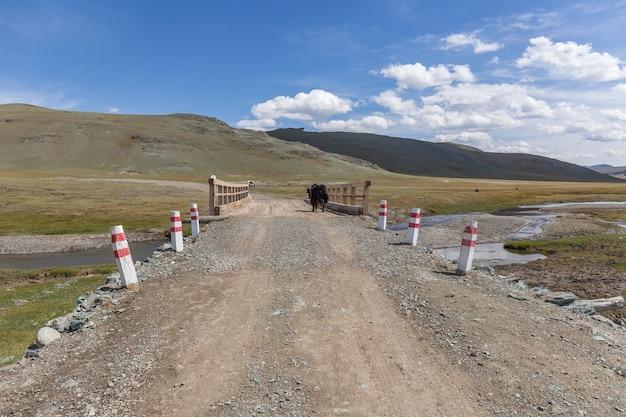 ヤクは橋を渡って川を渡ります。モンゴルアルタイ。