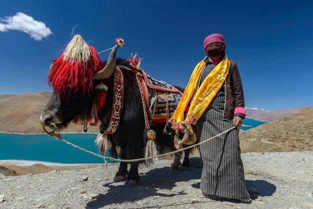 ヤク、チベットのナムツォ湖