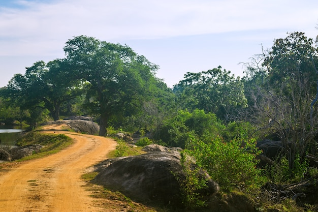 Yala national park, sri lanka, asia. beautiful road, lake and old trees. forest in sri lanka, big stone rock in the background. summer day in wilderness, holiday in asia.