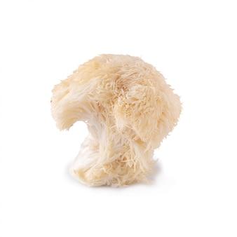Yamabushitake mushroom or lion mane mushroom isolated over white background.