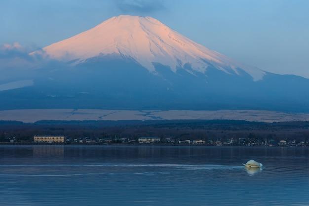 日本の白鳥による山中湖と富士山の反射