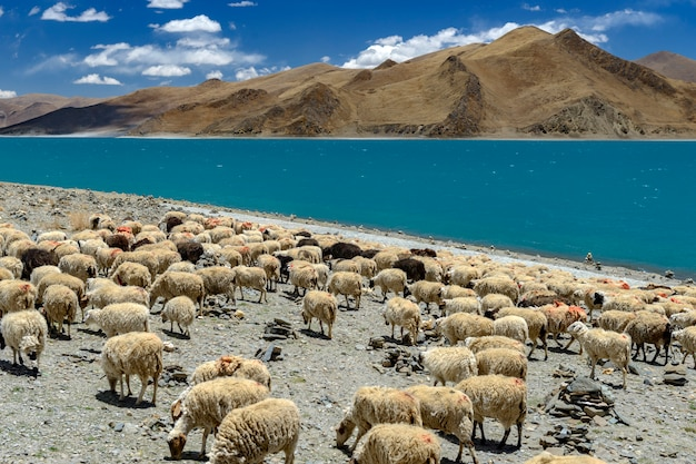 Yamdrok yumtso lake in tibet