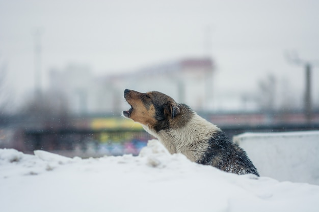 The yard dog sits in the snow in winter.