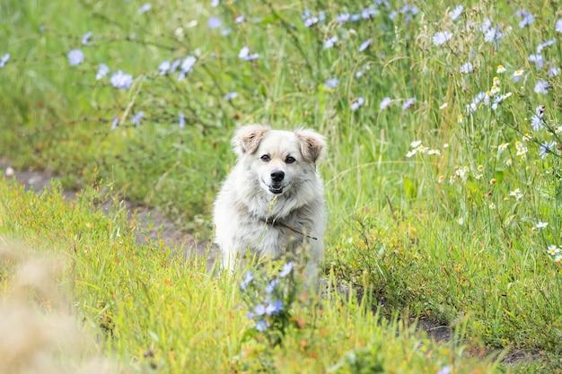 芝生の上の公園の庭の野良犬
