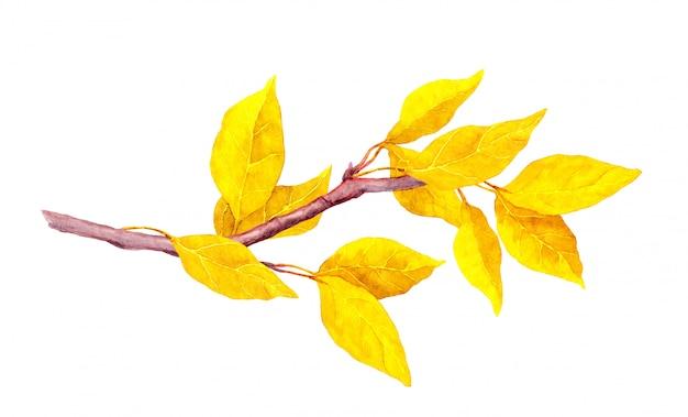 秋の枝に黄色の抽象的な葉。水彩イラスト