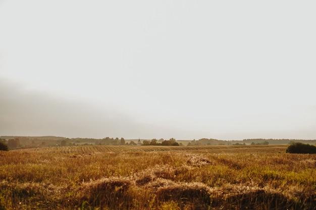 Желтый пейзаж панорамы деревни поля сельского хозяйства. красивый пейзаж природы