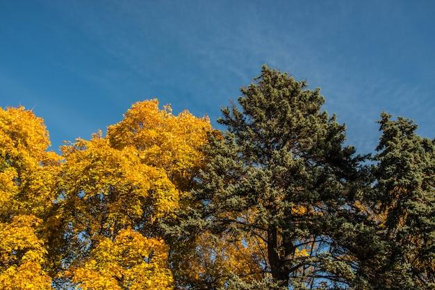公園の黄色と緑の木