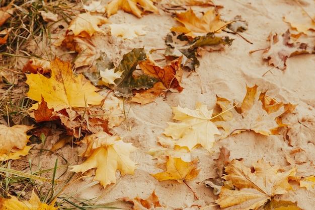 노란색과 주황색 마른 낙엽은 모래 가을 배경에 놓여 있습니다.