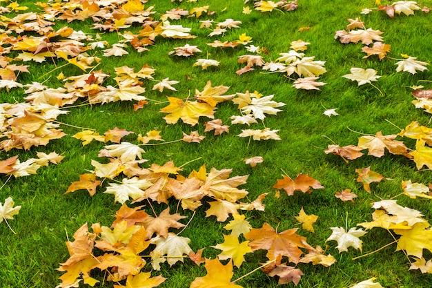 Желтые и оранжевые упавшие кленовые листья на ярко-зеленой лужайке