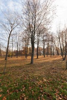 Желтая и оранжевая листва на деревьях осенью, деревья осенью во время листопада