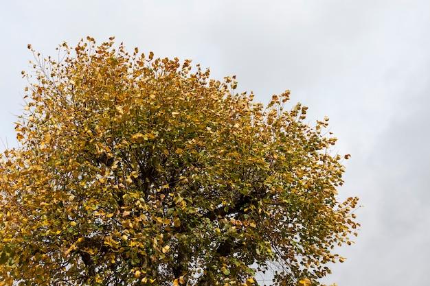 Желто-оранжевая листва на деревьях осенью