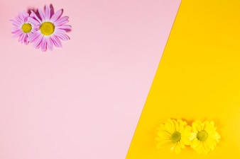 Yellow and pink flowers