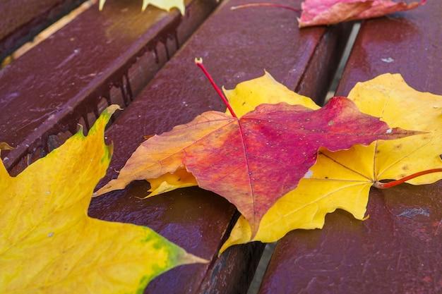 화창한 따뜻한 날 가을 배경 공원 벤치에 노란색과 빨간색 단풍