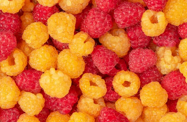 노란색과 빨간색 나무 딸기 배경입니다. 바로 위, 평면도입니다.