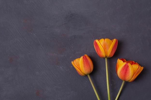 コンクリートの黄色と赤のチューリップの花。