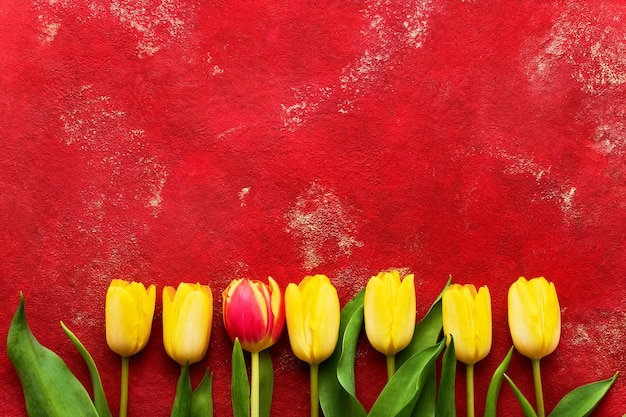 Желтые и красные тюльпаны на ярко-красном фоне.