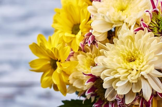 노란색과 흰색 국화입니다. 아름다운 여성을 위한 꽃 선물.