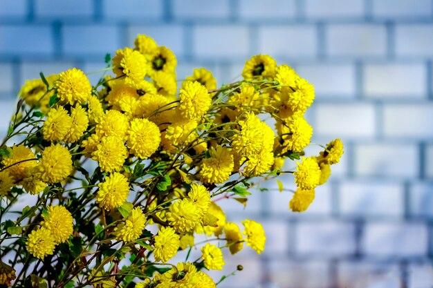 レンガの壁を背景に花壇に黄色のアスター