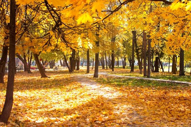 노란가 배경입니다. 떨어진 단풍잎