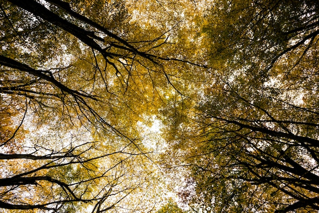 Yellow autumn foliage in the forest