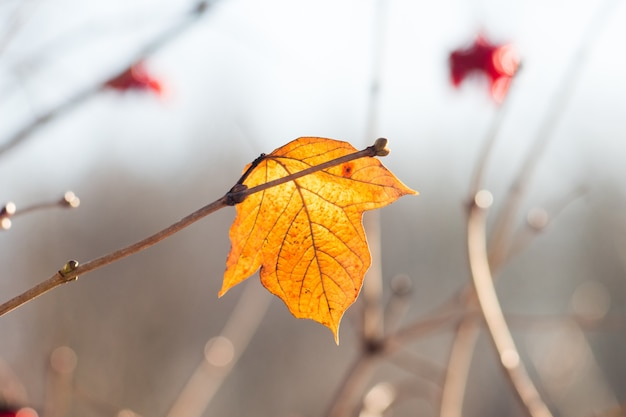 Yellow autumn leaf on a  blurred background