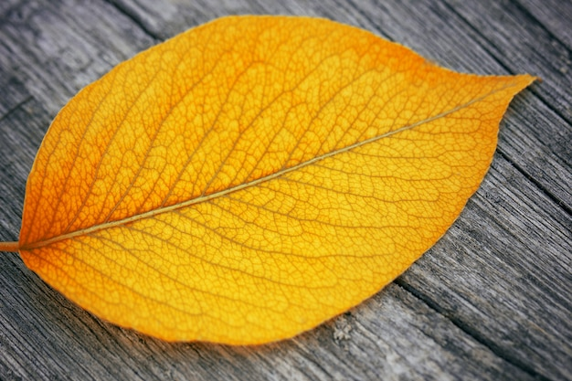 Yellow autumn leaf close-up on a wooden table, autumn