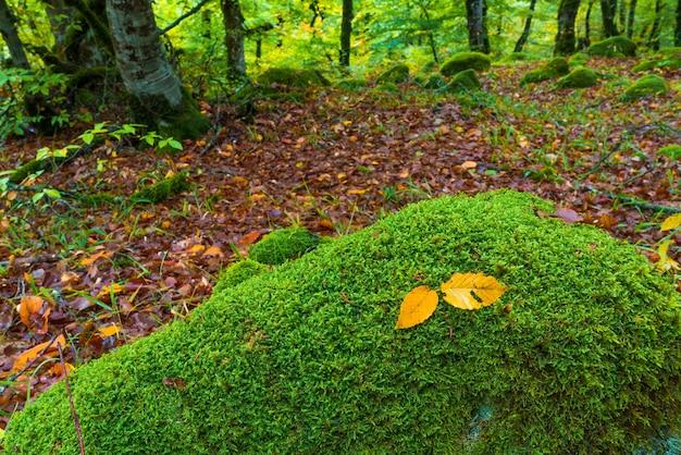 Желтый осенний лист в замшелом камне