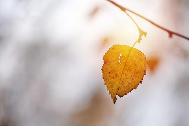 枝に黄色い紅葉