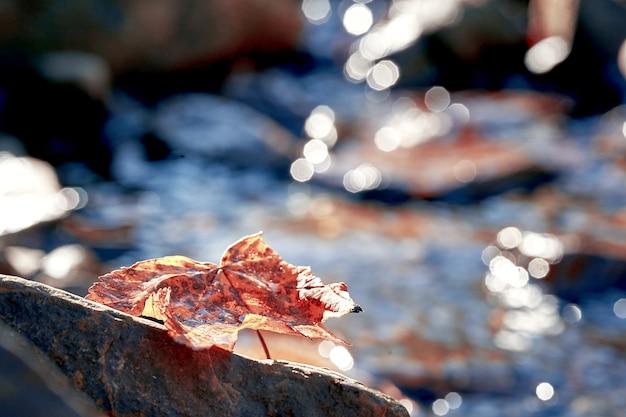 Желтый осенний лист на скале. малая глубина резкости. размытый фон боке