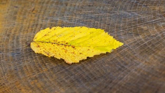 Yellow autumn leaf on stump in forest, autumn background